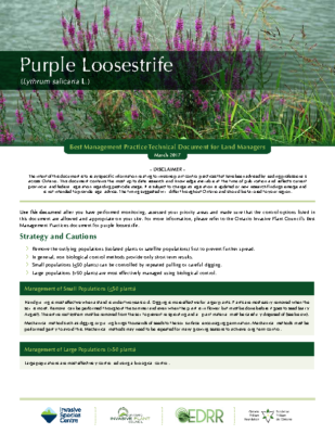 Purple Loosestrife Technical Bulletin