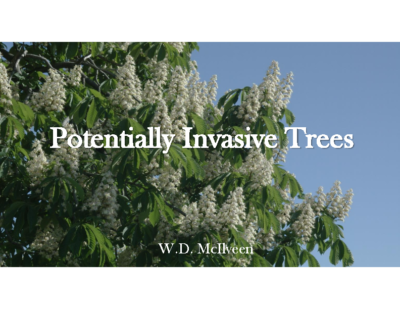 Potentially Invasive Trees