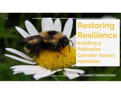 Restoring Resilience  Building a Pollinator Corridor Across Hamilton