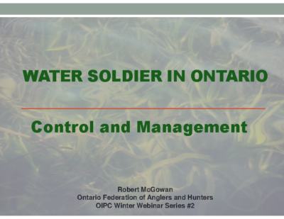 Water Soldier Status in Ontario