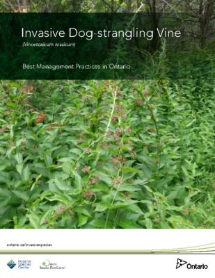 Dog-strangling Vine