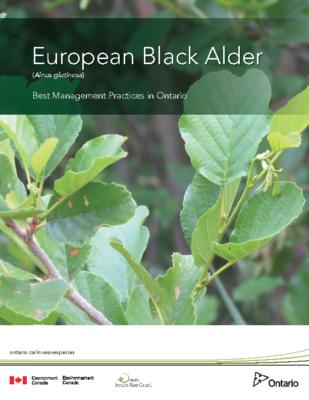 European Black Alder