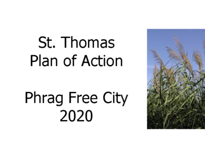 St. Thomas Phragmites Action Plan