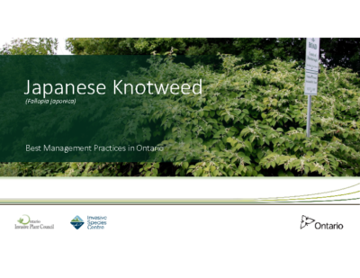 Japanese Knotweed Presentation