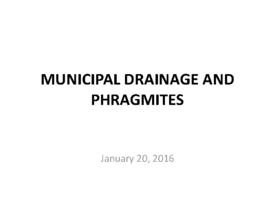 Invasive Phragmites Management in Municipal Drains in Kingsville