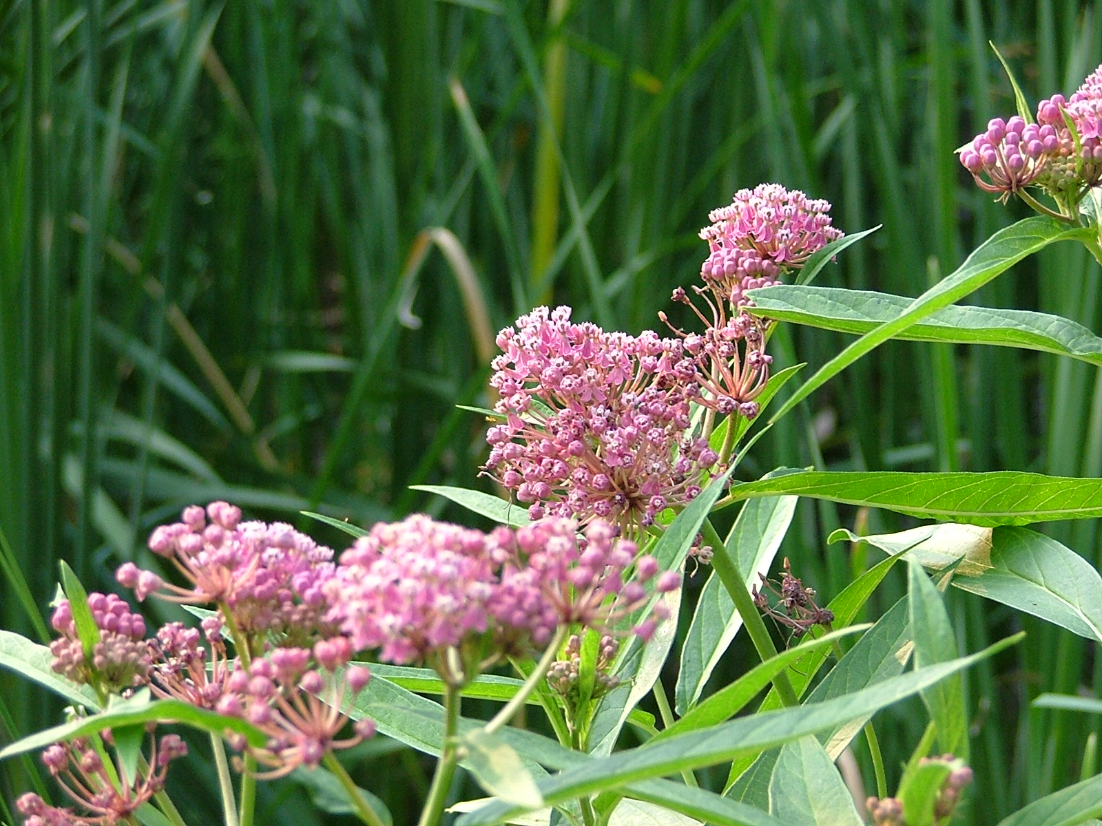 Grow Me Instead - Brooklin Horticultural Socie