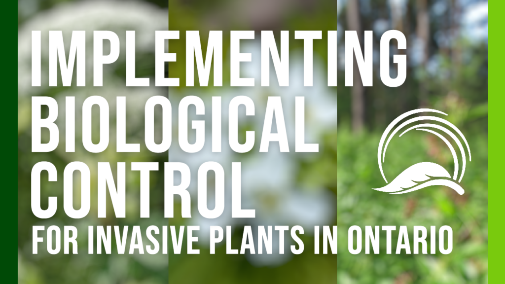 Implementing Biological Control for Invasive Plants in Ontario