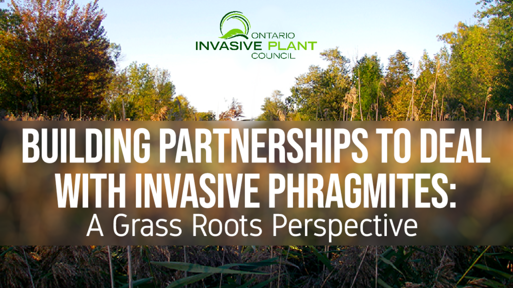 Building Partnerships to deal with Invasive Phragmites: A Grass Roots Perspective