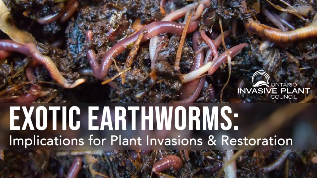 Implications of Exotic Earthworms for Plant Invasions & Restoration