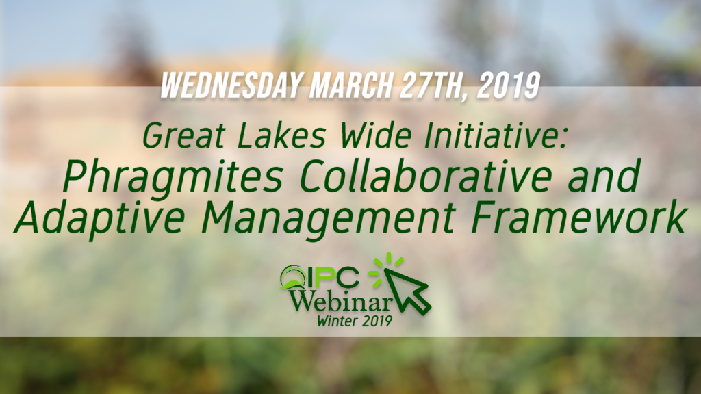 Phragmites Collaborative and Adaptive Management Framework