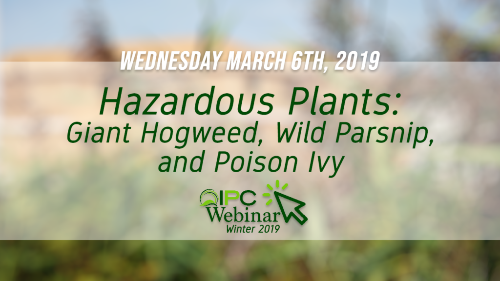 Hazardous Plants: Giant Hogweed, Wild Parsnip and Poison Ivy