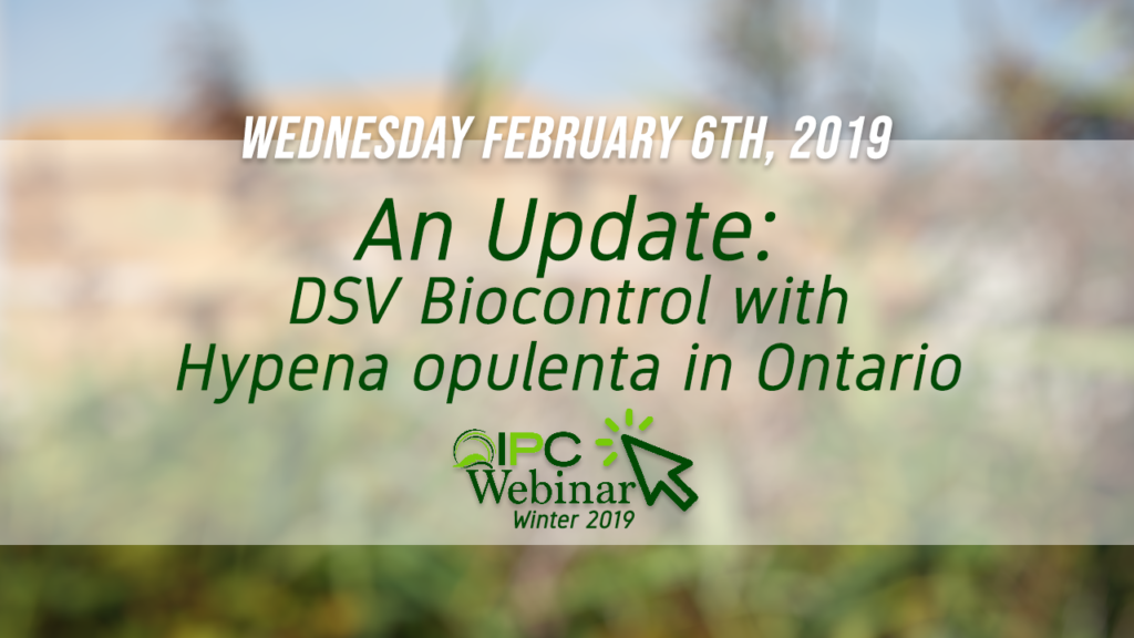DSV Biocontrol with Hypena opulenta in Ontario