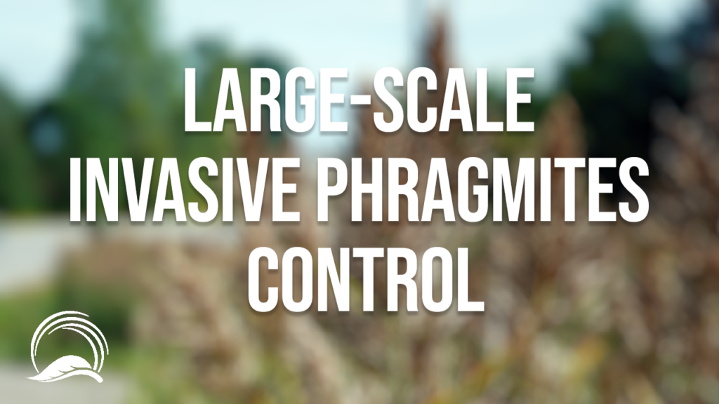 Large scale Invasive Phragmites Control: Long Point Emergency Use Registration Pilot Project Update