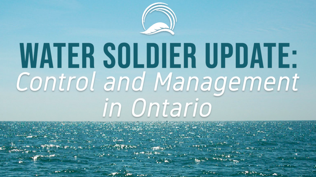 Water Soldier Update: Control and Management in Ontario