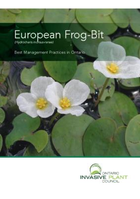 European Frog-Bit