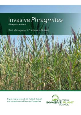 Invasive Phragmites (2020)